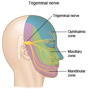 Illustration showing nerves in the face